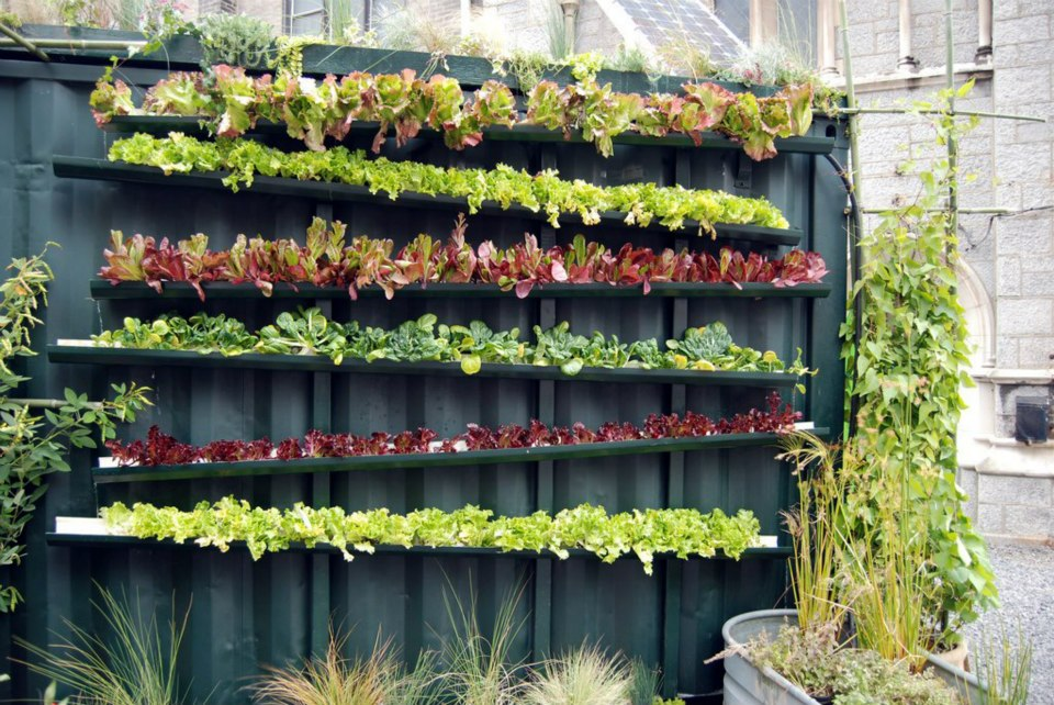 vertical vegetable garden #2