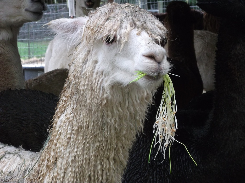 Got Livestock? Feed Them Hydroponically Homegrown Barley Sprouts