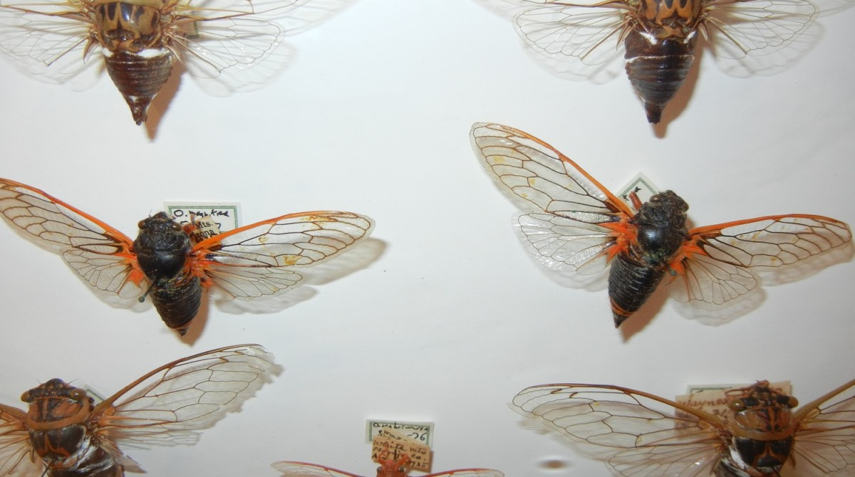 How-To: Collect and Display Insects