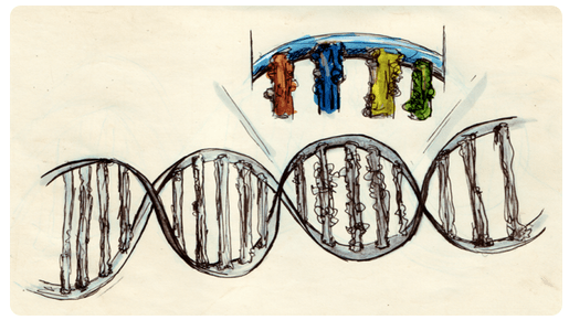 Synthetic Biology for Makers