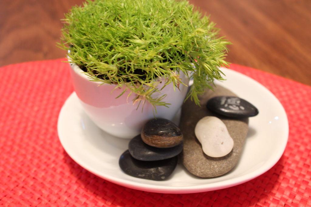 How-To: Tiny Green Tea Garden