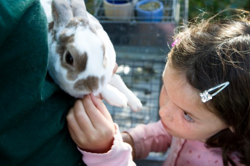 Getting curious about bunnies at the FARMcurious exhibit.