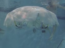 Reported on Maker Pro Newsletter 8 Virginia Tech's Cyro jellyfish robot.