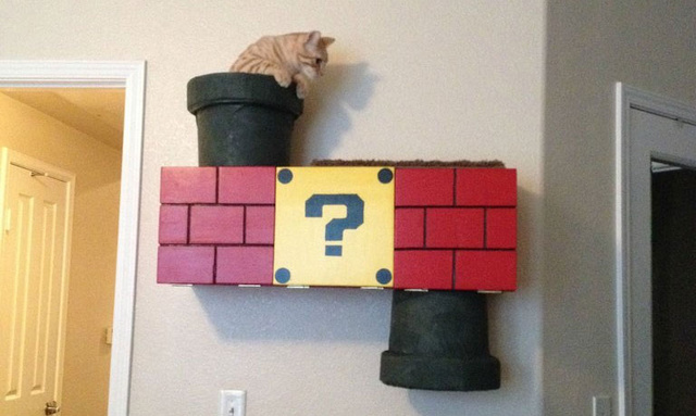 article featured image - Cat Climber