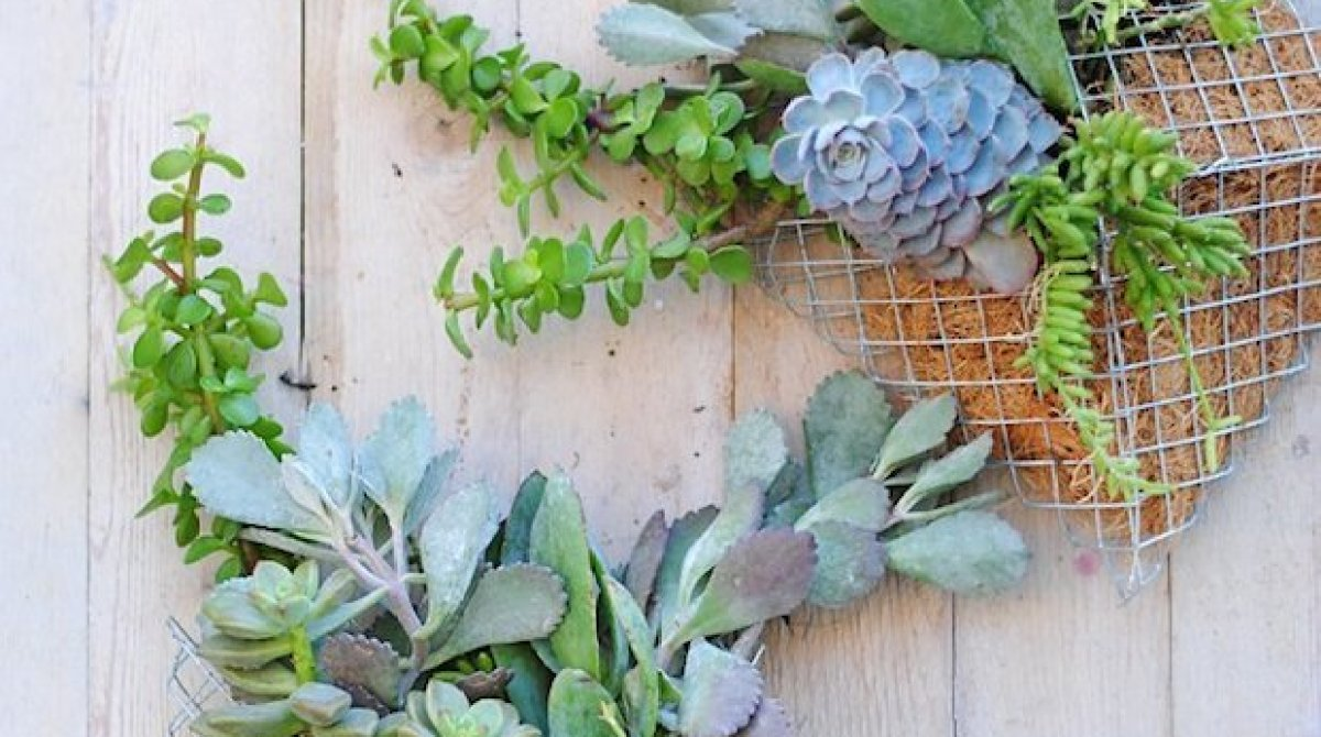 How-To: Pocket Wall Planter