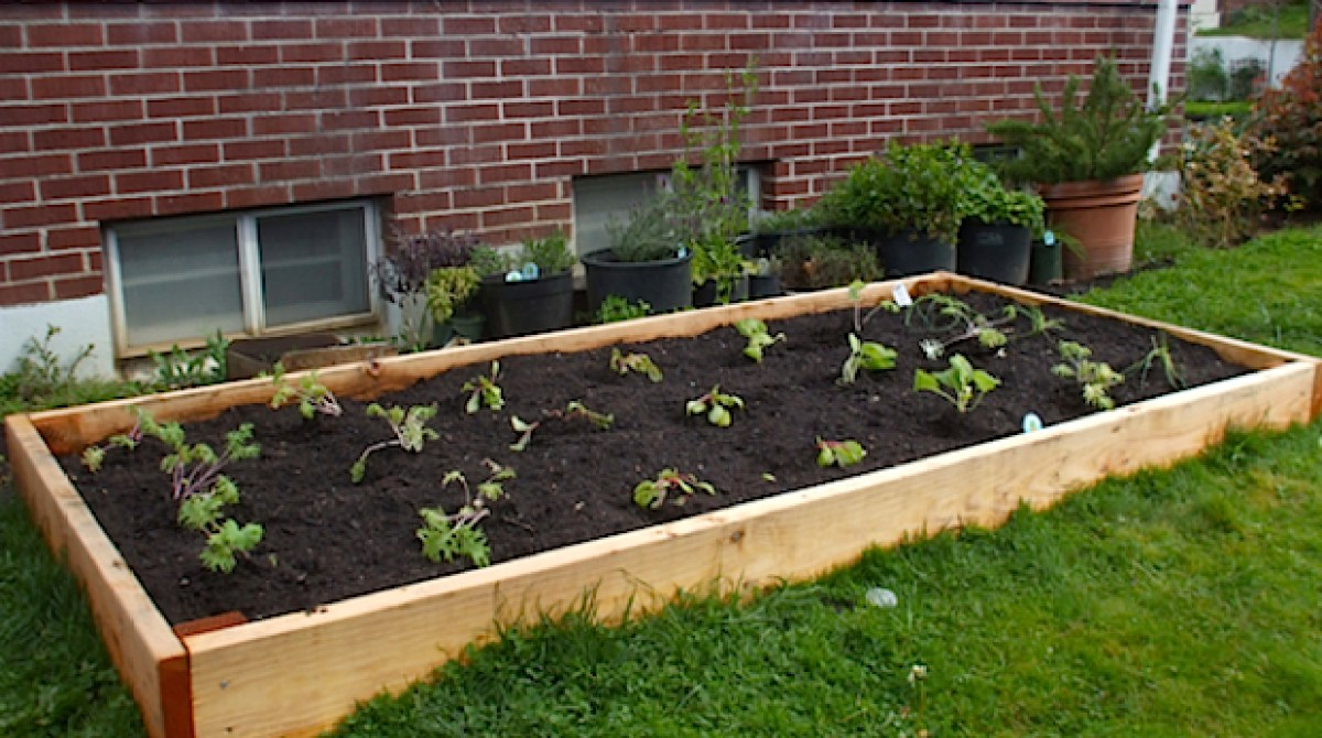 Flashback: Build Your Own Raised Garden Bed
