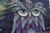 Many owls around