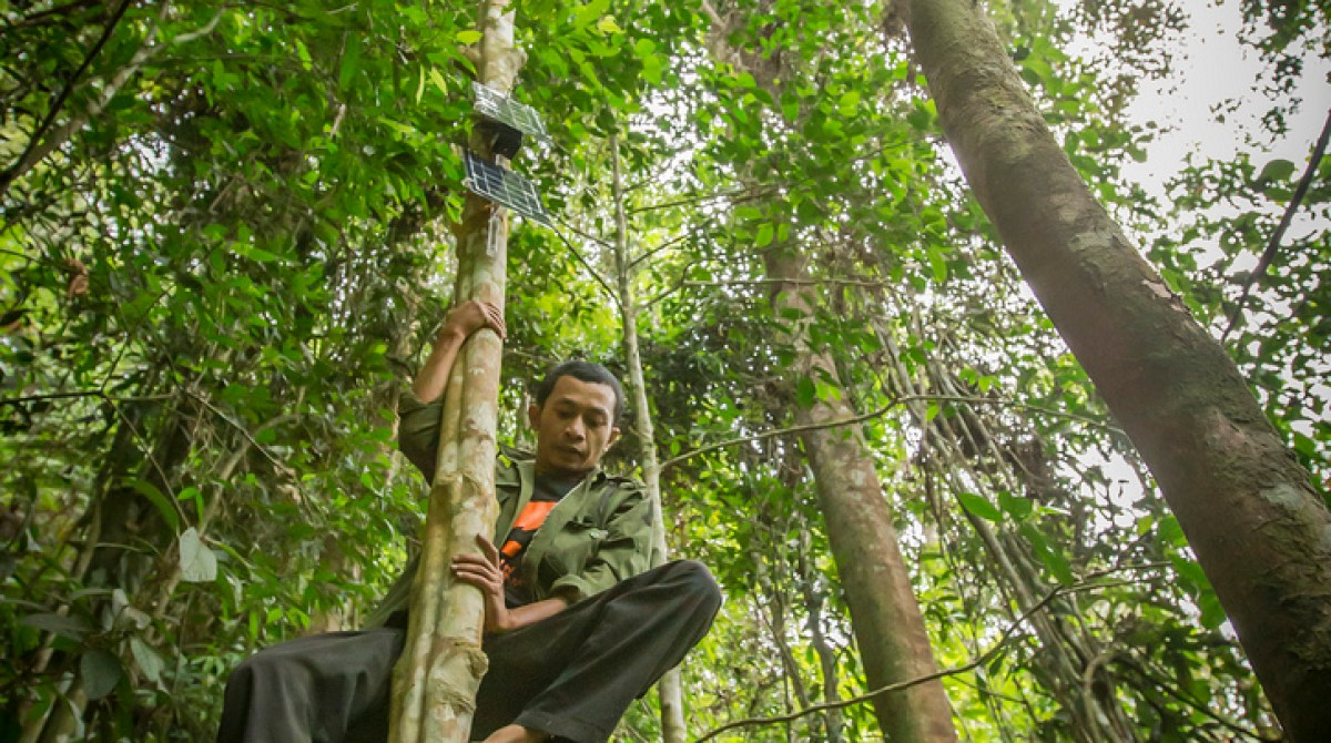 Turn Your Old Cell Phones into DIY Environmental Listening Devices to Stop Illegal Logging
