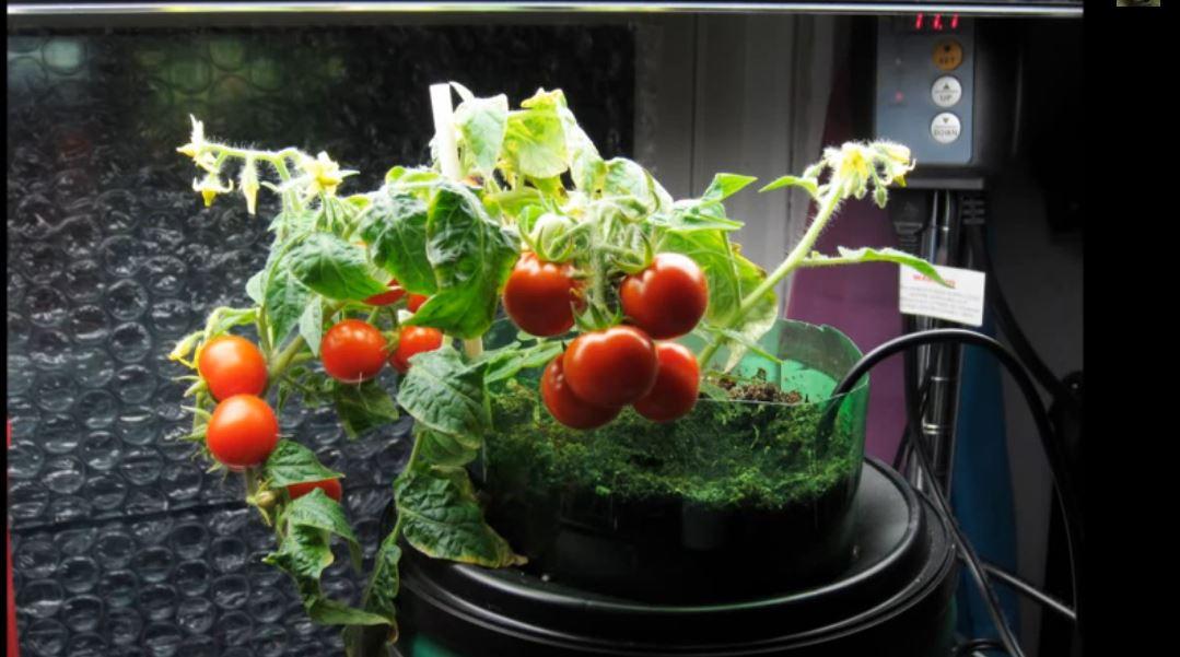 Simple DIY Self-Watering Planter