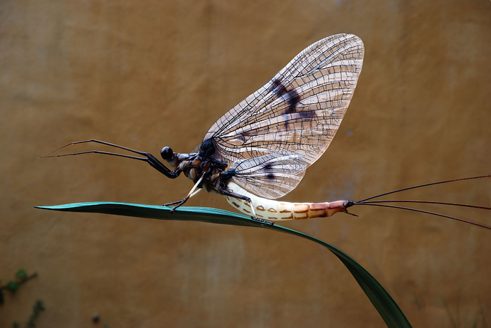 Incredible Insects On The Form 1+ 3D Printer