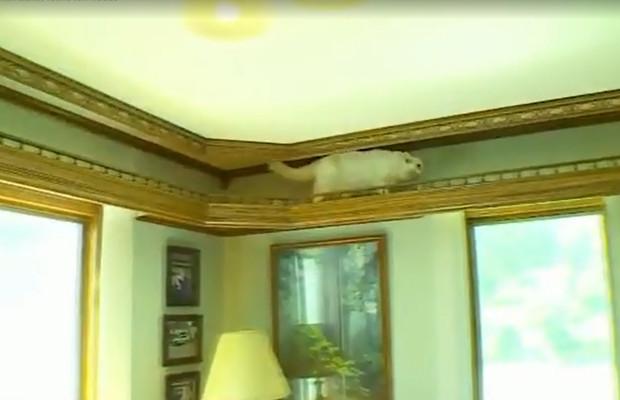 Crazy Cat Home Improvements