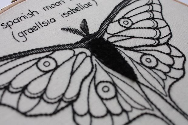 04_spanish_moon_moth_flickr_roundup