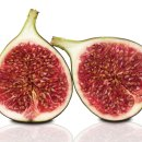 How to Clone and Grow a Fig Tree