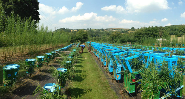 A small furniture forest of 3,000 trees spreading over a 2.5 acre site.