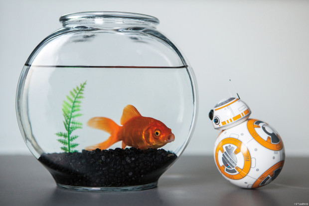 Goldfish and BB-8