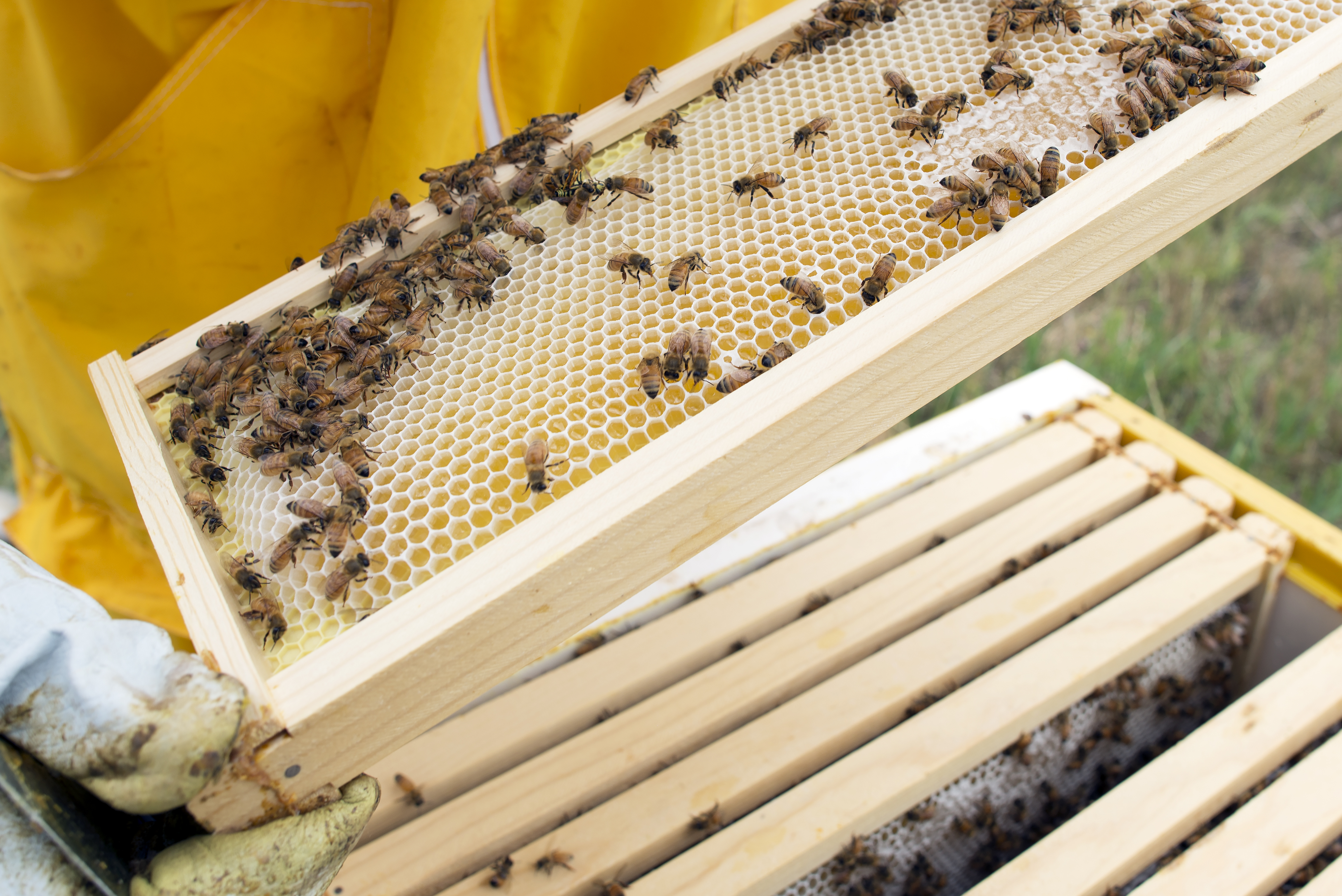 The Internet Of Bees Adding Sensors To Monitor Hive Health Make Beehive Wiring Board If A Honey Bee Worker Weighs 120mg And Growth Was Entirely In That Would Be Equivalent 1900 Day