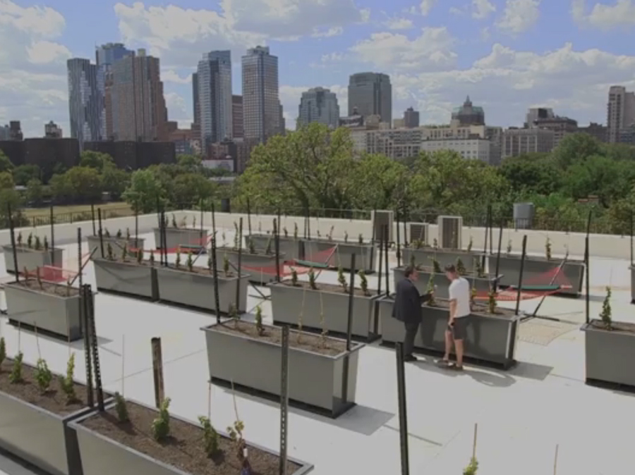 MakerCon Preview: The First Rooftop Winery in New York
