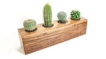 cactus planter get hands dirty