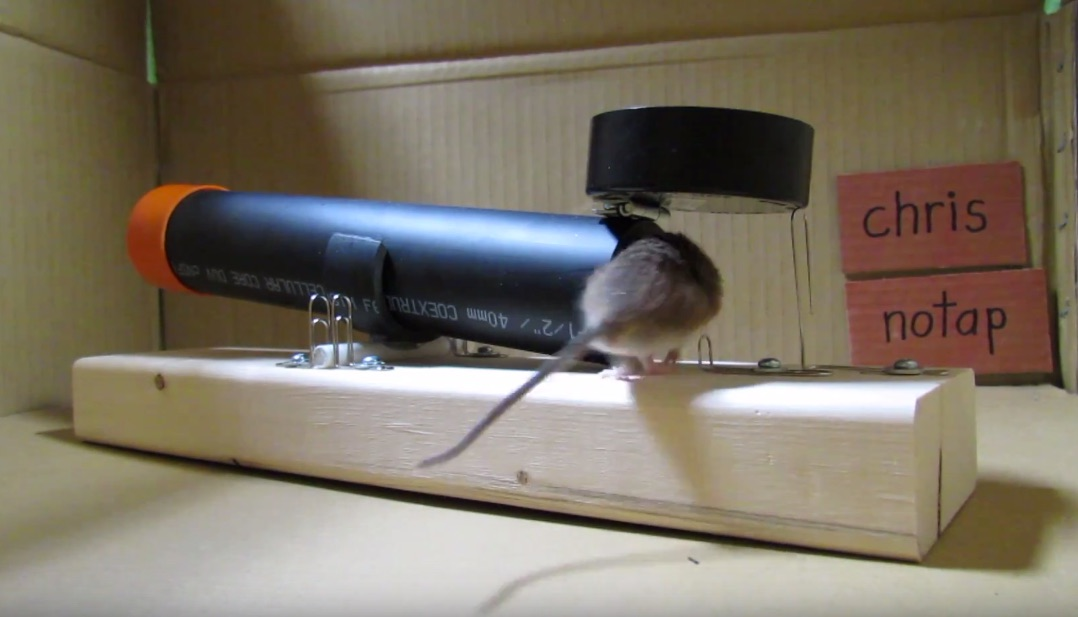 Simple, Humane PVC Mousetrap