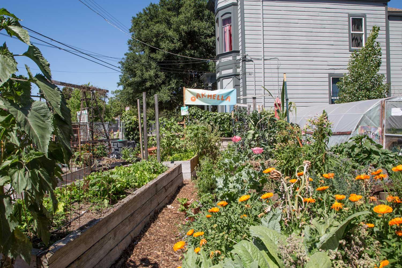 Cultivating a Neighborhood Garden as a Community Organizing Hub