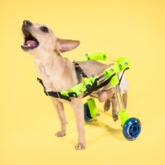 Wheelchair Dog Made To Order Chairs Custom Canine Make They Were Unable Afford The Costly Commercial Wheelchairs Available Online I Rose Occasion Design Something For An Adorable
