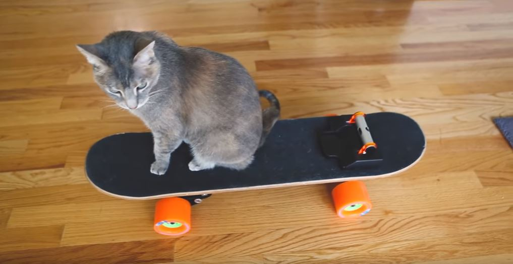 Building Your Cat A Custom Electric Skateboard