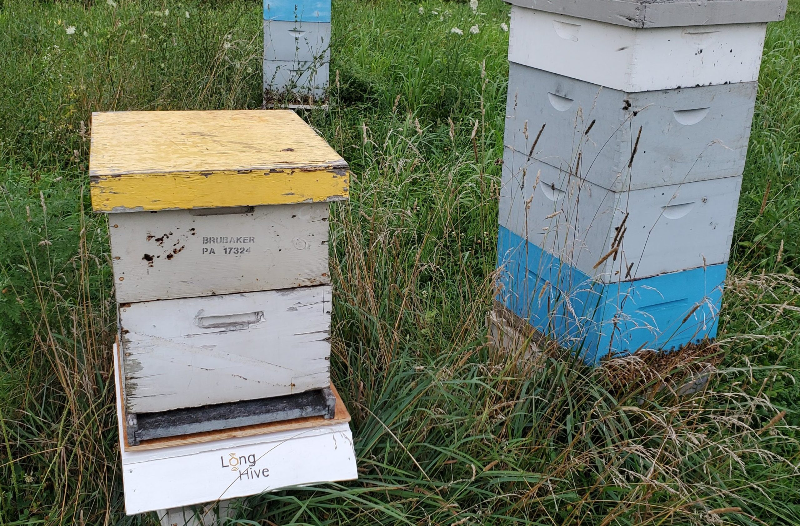 Make:cast – Machine Learning for Beekeepers
