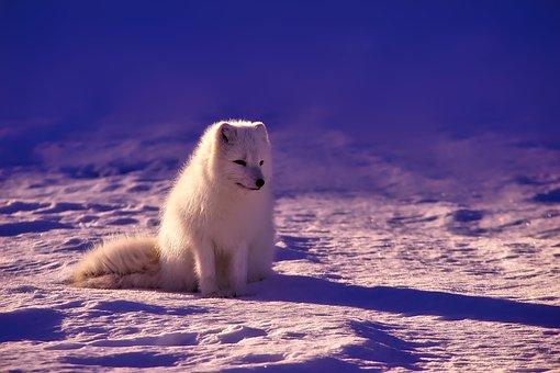 北極 地球温暖化