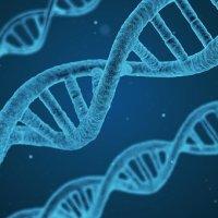 ムコ多糖症 遺伝子治療