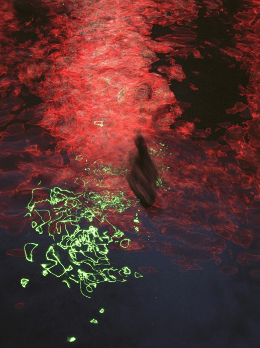 Red Light River, Amsterdam