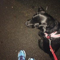 Running (with dogs)