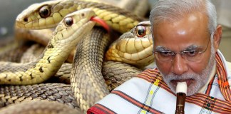 modi-playing-fluet-snakes