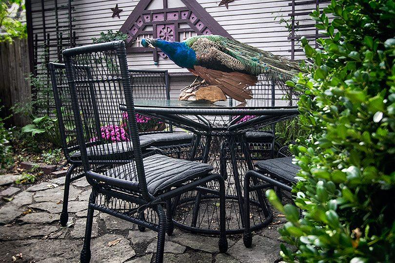 Stori Modern Memoir Dining Collection. Plus a Peacock.