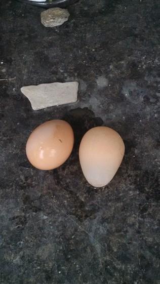 shelless egg