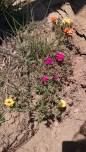 for pollinators