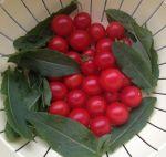 Sauerampfer und Tomaten
