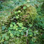 kleine Gipfel mit kleinen Bäumen