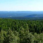 Panorama von der Leistenklippe mit Hohnekamm und Wurmberg