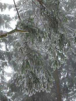 Zwischen Seesen und Lautenthal - Winterwald