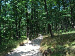 Lichte Wälder rund um die Burg Regenstein