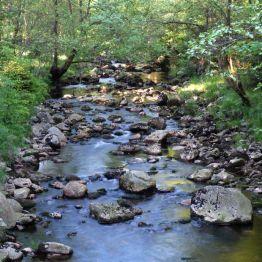 Das Kellwasser in der Nähe des Gasthofes Rinderstall bei St. Andreasberg, St. 123