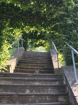 Fast perfekt getarnter Gast im Blankenburger Schloßpark
