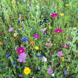 Die Wildblumenwiese im Landschaftspark Degenershausen - jedes Jahr wieder zu bewundern!