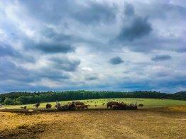 Die Bisons bei Stangerode