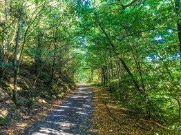 Ein wunderschöner, schattiger Weg...