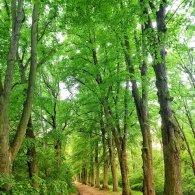 Weg im Schlosspark