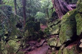 6 - 18 photos from Puzzlewood shortly after Star Wars: Episode VII wrapped filming there!