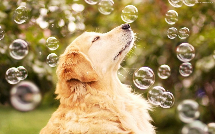dog-bubbles.jpg