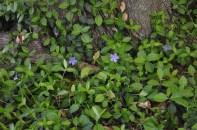 spring_sightings_8