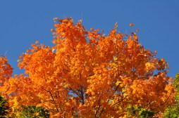 fall_2012_10